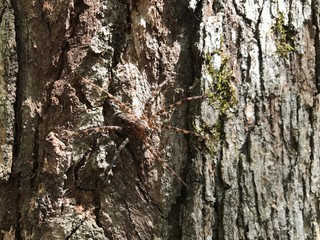 Large brown spider on tree bark with moss