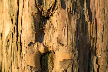 Baumstruktur eines kaputten Laubbaums in der Dämmerung