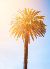 Tropical palm tree on the sky background