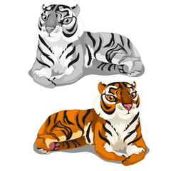 White striped Bengal and brown tigers. Vector