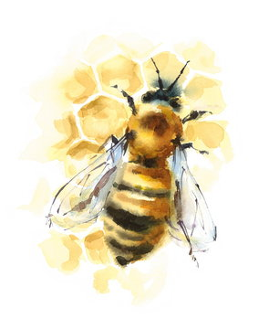 Watercolor Honey Bee on Honeycomb Hand Painted Illustration isolated on white background