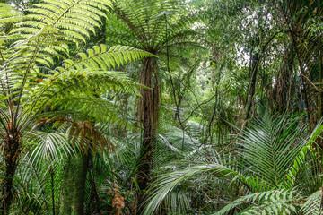 Fern trees in jungle