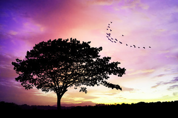 Silhouettes of lone big tree beautiful branch against the dawn or evening sky. birds flying above the sky. lonely feeling. dream concept. fantasy backgound concept
