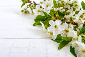 White flowers of a cherry on branches on a white wooden background. Free space for your project (note). Background.
