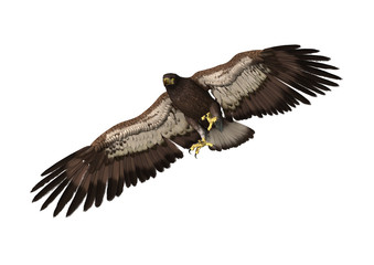 3D Rendering Eagle on White