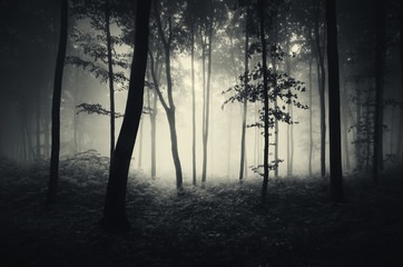 trees in mist forest background