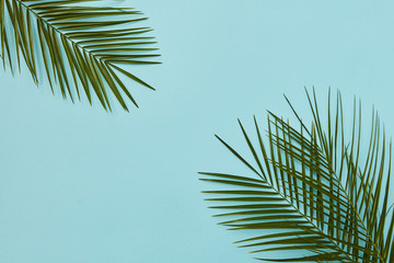 Palm leaves isolated Wall mural
