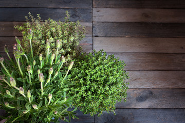 Fresh lavender and thyme