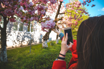 young pretty woman taking photo of blooming sakura