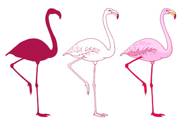 Set of vector pink flamingo bird illustration. Hand drawn sketch with the wild animal in color, outlines, silhouette