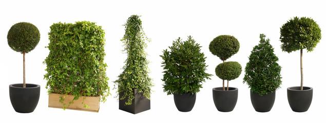 Fototapeta große Pflanzen für Veranstaltungen auf weiß isoliert im XXL-Set obraz