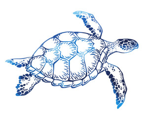 Hand drawn vector turtle