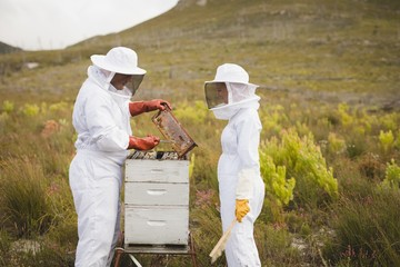 Beekeepers working on beehive at field
