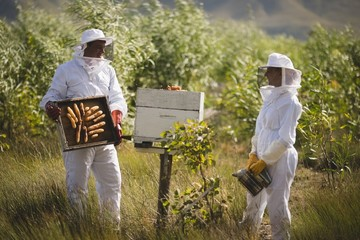 Beekeeper looking at colleague holding frame of honeycomb