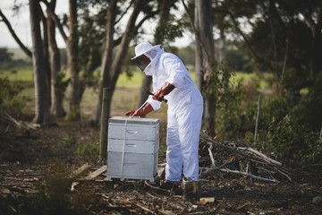 Beekeeper working on honeycomb at apiary
