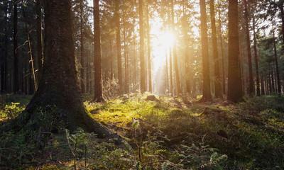 Sonnenuntergang an einer Lichtung im Wald