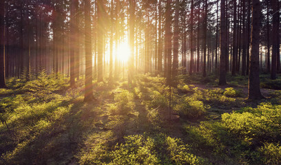 Idyllic forest with sunlight