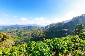 Landscape view of a valley filled with coffee plantations near Manizales, Colombia.