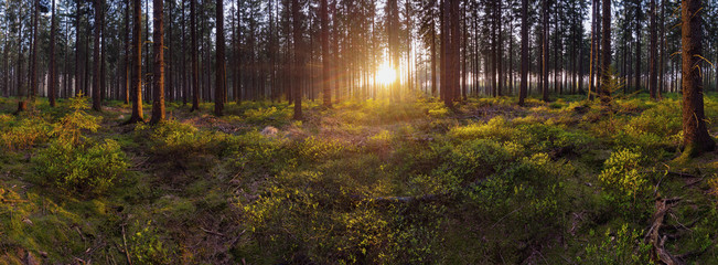Green forest scenery panorama with the sunlight