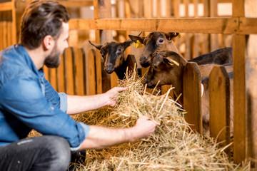 Farmer feeding goats