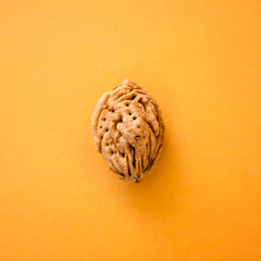 bone peach on a yellow paper background