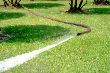 Water from the hose on the green grass in the garden.
