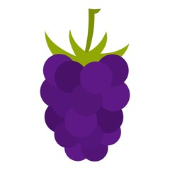 Fresh blackberry icon isolated