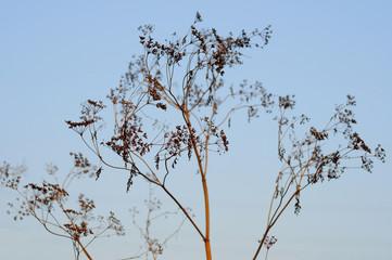 pattern of dry plants