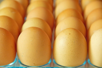 Close up of a lot of eggs in a row, perspective view,