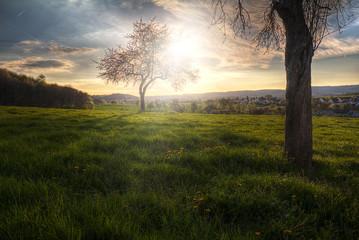 HDRI einer Eifelwiese am Abend. Das Bild ist in Wittlich entstanden und zeigt zwei Apfelbäume im Gegenlicht auf einer Wiese. Das HDRI bringt die extreme Lichstimmung zur Geltung.