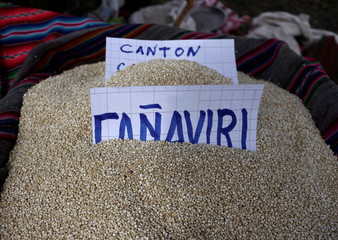 Quinoa grains are seen as part of the sweet quinoa promotion at the Canaviri district in La Paz