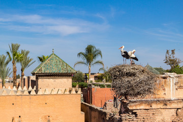 Stork on a nest on the roofs of Marrakesh in Morocco.