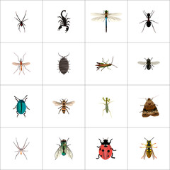 Realistic Dor, Grasshopper, Gnat And Other Vector Elements. Set Of Animal Realistic Symbols Also Includes Dragonfly, Gnat, Spider Objects.