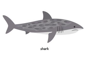 Shark - biggest fish,  very dangerous predator for humans and sea dwellers