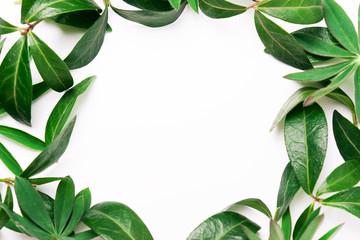 Frame of green leaves.