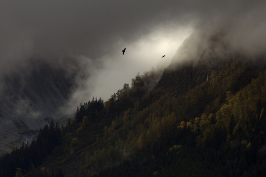 Dramatic Silhouette of Eagles in Vast Alaska Wilderness