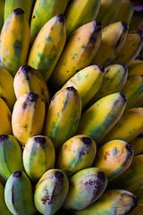 Bananenstaude frisch