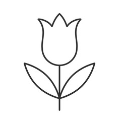 Tulip linear icon
