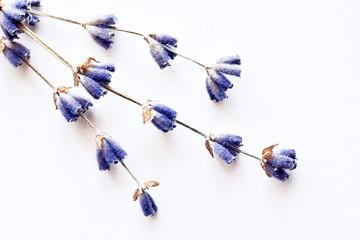 Natural lavender flowers