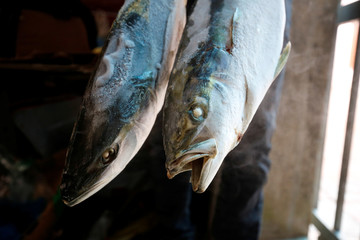 Fish which an employee says are contaminated and decomposed are pictured at a frozen food storage facility in Vietnam's central Ha Tinh province