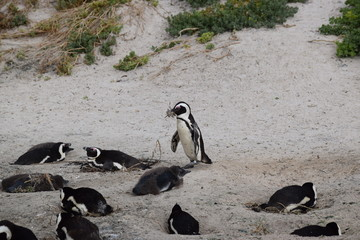 Penguin 5
