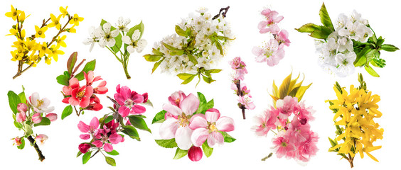 Blossom apple tree cherry twig pear almond forsythia Set spring flowers
