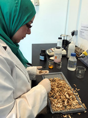 Researcher Marwa Faisal works on her project to create biodegradable plastic bags from shrimp shells, a project in collaboration with Nottingham University, at the Nile University in Cairo