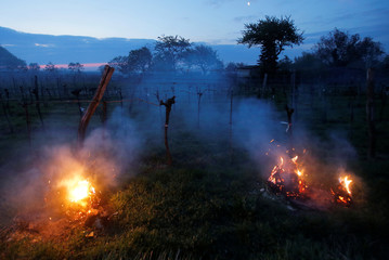 Straw bales are burnt to protect a vineyard from freezing temperatures in Vienna