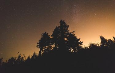 Stars Over Treetops