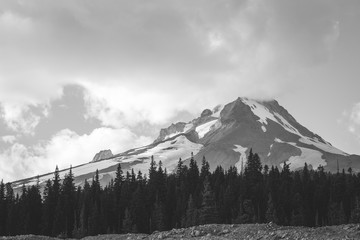 Mount Hood and Forrest in B & W