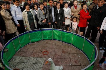 People gather around a ring with a duck in a zoo in Pyongyang