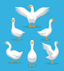 White Goose Poses Cartoon Vector Illustration
