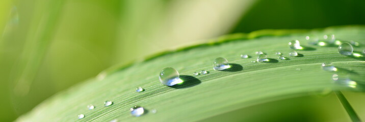 Water drops on leaves after the rain