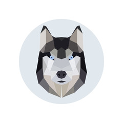 Husky head polygonal style.